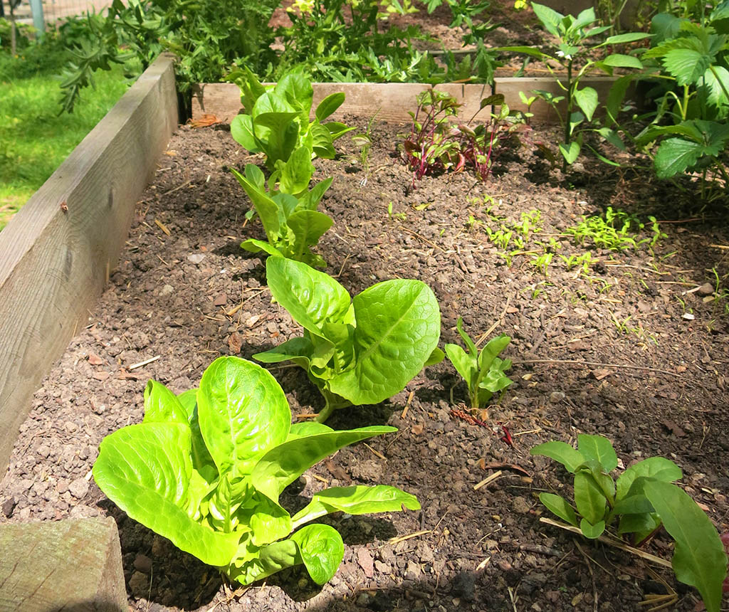 Gartentipps aus dem tigergarten agenda josefstadt for Garten tipps